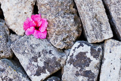 Stone wall with flower Stock Images