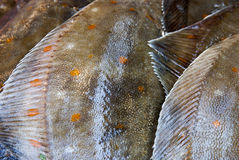 Abstract closeup of fresh fish Stock Photo