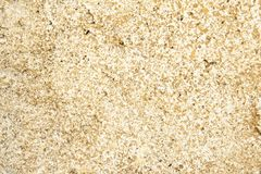 Abstract Closeup Of Old Rendered Wall Texture. Closeup of bark texture for background or texture overlays use royalty free stock images