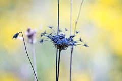 Abstract closeup photo of dry flower with interesting texture an. D nice bokeh stock image