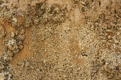 Abstract Closeup Of Sandy Rocky Ground Texture. Closeup of bark texture for background or texture overlays use stock photos
