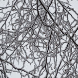 Abstract closeup of snow laden birch branches looking up. This black and white looking abstract design is random and squiggly and quite pretty.  It shows the Royalty Free Stock Images