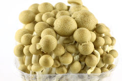 Abstract clump of Brown beech mushrooms Stock Photography