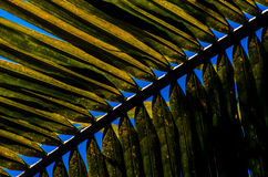 Abstract coconut leaf Stock Photography
