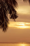 Abstract coconut leaf on the sunset background with copy space. Royalty Free Stock Images
