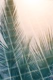 Abstract coconut leaves reflecting on swimming pool surface. Abstract coconut leaves reflecting on swimming pool water under sunset light Royalty Free Stock Image