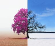 Abstract collage with mixed different sides of tree with changing seasons from summer to winter. Abstract collage with mixed different sides of tree with stock photos