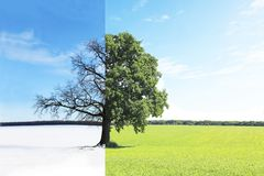 Abstract collage with mixed different sides of tree with changing seasons from summer to winter. Abstract collage with mixed different sides of tree with royalty free stock photos