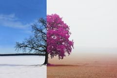 Different sides of tree with changing seasons from winter to autumn. Abstract collage with mixed different sides of tree with changing seasons from winter to stock photos