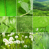 Abstract collage of nature photos Royalty Free Stock Images
