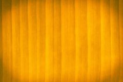 Abstract color banana leaves. Stock Photography