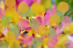 Abstract color Bokeh Blurred Background Royalty Free Stock Photo