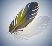 Pen. Vector illustration. Abstract, color, vector bird feather stock illustration
