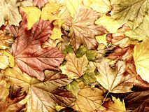 Abstract colored autumn leaves Royalty Free Stock Image