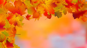 Abstract colorful autumn background Royalty Free Stock Images