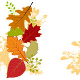 Abstract colorful autumn leaf greeting card stock photos