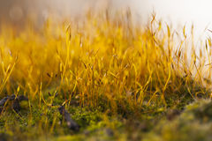 Abstract, colorful composition with blurred moss flowers Royalty Free Stock Image