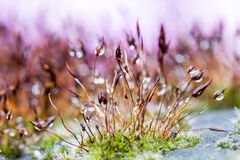 Abstract, colorful composition with moss flowers. In summer and spring Royalty Free Stock Photo