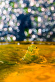 Abstract, colorful composition with small bokeh lights, water drops and water texture Royalty Free Stock Photography