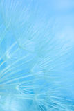 Abstract colorful dandelion seeds Stock Photos