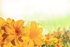 Abstract of colorful flowers  field. Abstract of colorful flowers field with blur Stock Photography