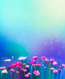 Abstract colorful oil painting red, pink cosmos flower. Daisy, wildflower in field. Blurry  wildflowers at meadow with bokeh and soft green, blue sky. Spring Royalty Free Stock Image