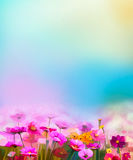 Abstract colorful oil painting red, pink cosmos flower. Daisy, wildflower in field. Blurry  wildflowers at meadow with soft blue sky. Spring, summer season Royalty Free Stock Photos