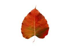 Abstract colorful orange leaf, isolated on white background stock image