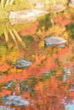 Abstract colorful reflection of vibrant Japanese autumn maple leaves on pond waters Stock Image