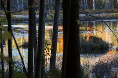 Abstract, colorful reflections on water of a bog in New Hampshir Royalty Free Stock Photo