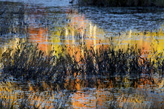 Abstract, colorful reflections on water of a bog in New Hampshir Stock Images