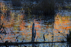 Abstract, colorful reflections on water of a bog in New Hampshir Stock Photography