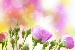 Abstract Colorful Spring Background Stock Images