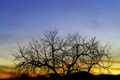 Abstract colorful sunset landscape with tree silhouette Stock Image
