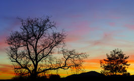 Abstract colorful sunset landscape with tree silhouette Stock Photos