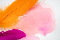 Abstract colorful watercolor on white paper with feathers Stock Photos