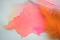 Abstract colorful watercolor on white paper with feathers Stock Image