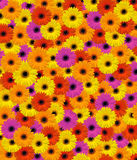 Gerbera background Royalty Free Stock Images