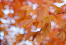 Abstract Colors and Light. Abstract fall colors resembling the shapes of leaves Stock Photos