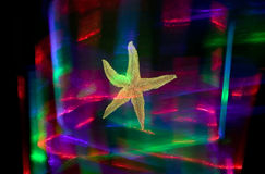 Abstract colors and starfish. There is a starfish with colorful red, green, blue background Royalty Free Stock Photo