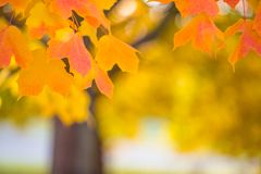 Abstract colourful autumn background stock images