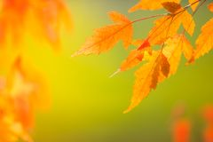 Abstract colourful autumn leaves stock photo