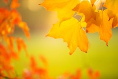 Abstract colourful autumn leaves royalty free stock photo