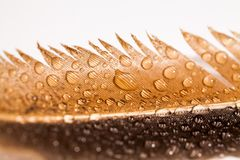 Abstract composition with colorful hen feather and water drops Royalty Free Stock Image