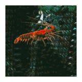 Relentless Crustacean stock image