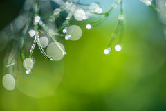 Abstract composition with dew drops over dill plants. Abstract composition with  dew drops over dill plants - selective focus, copy space Royalty Free Stock Photos