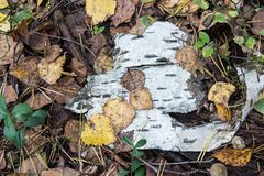 Abstract composition from foliage and bark Royalty Free Stock Photos