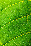 Abstract composition with leaf texture Stock Image