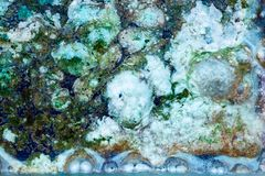 Abstract composition with mix of oil, water and colorful ink. With bubbles stock photography