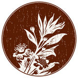 Abstract Composition With Myrtle Branch. Hand drawn branch of myrtle on dark round background. Scratched elements and grange style like gravure. Engraved spice vector illustration